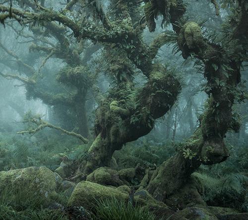 Neil Burnell fotí tajemné a mystické fotografie odlehlých pohádkových lesů
