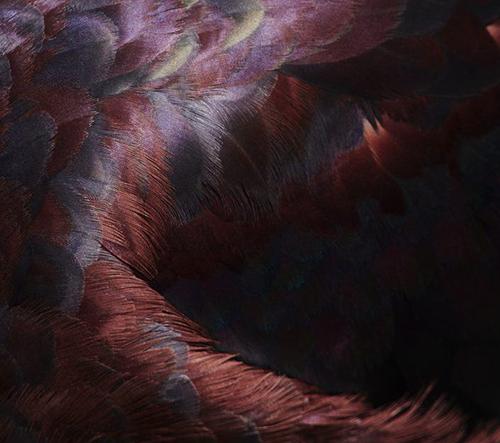 Thomas Lohr zachytává dechberoucí detaily ptačího peří