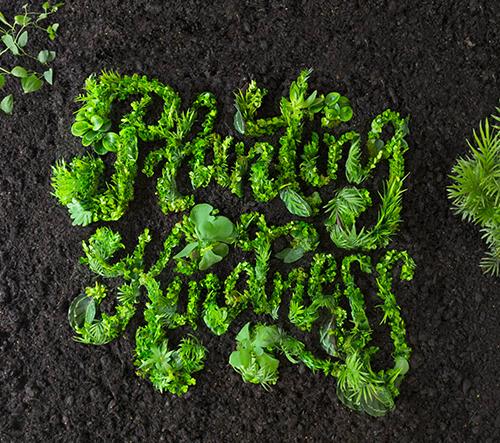 Danielle Evans vytváří živé typografické díla z rostlin